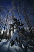 Winter Trees Photo Posters - Winter Blue Poster by Karol  Livote
