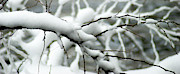 Snowy Night Art - Winter Branch by Optical Playground By MP Ray