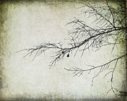 Winter Branch Print by Suzanne Barber