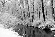 Beautiful Creek Posters - Winter by the Crum Creek Poster by Deborah  Crew-Johnson