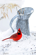 Randall Branham - Winter Can Cardinal