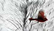 Winter Trees Photos - Winter Cardinal by Heather Applegate