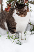 Laura Melis - Winter cat