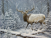 Snowy Trees Paintings - Winter Coat by Mike Stinnett
