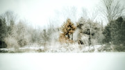 Snow-covered Landscape Digital Art Prints - Winter Colors Print by Julie Palencia