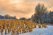 Paul Freidlund - Winter Corn Field One...