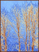 Winter Cottonwoods Abstract Print by Will Borden
