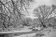 James BO  Insogna - Winter Creek in Black and White