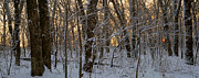 Winter Landscapes Photo Metal Prints - Winter Dawn Metal Print by Bruce Morrison