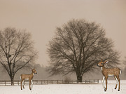 Deer Silhouette Digital Art - Winter Deer Scene by Becky Hayes