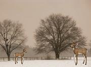 Winter Deer Scene Print by Becky Hayes