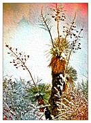 Las Cruces Print Framed Prints - Winter Desert Yucca Framed Print by Barbara Chichester