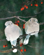 Perched Posters - Winter Doves Poster by Betty LaRue