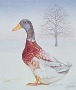 Snow Landscapes Paintings - Winter Drake by Ditz