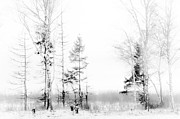 Winter Scenery Prints - Winter Drawing Print by Jenny Rainbow