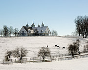 Kentucky Horse Park Photo Prints - Winter Dream Print by Roger Potts