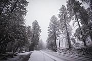 Winter Storm Photo Framed Prints - Winter Driven Framed Print by Anthony Citro