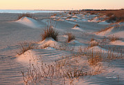 Sea Oats Prints - Winter Dunes Print by Suzanne Gaff