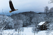 Jahred Allen Photography Posters - Winter Eagle Poster by Jahred Klahre