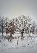 Winter Landscape Photos - Winter Embrace by Pamela Baker