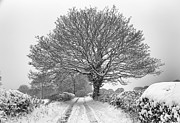 Mick Gosling - Winter Farm Lane Tree