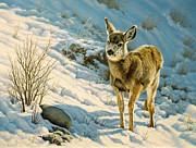 Winter Fawn - Mule Deer Print by Paul Krapf