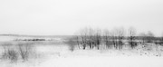 Winter Scenery Framed Prints - Winter Fields. Monochromatic  Framed Print by Jenny Rainbow