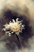 Karen Slagle - Winter Flower