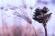Impressionistic Photos - Winter Flowers  by Bob Orsillo