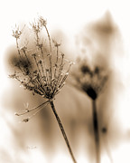 Calming Prints - Winter Flowers II Print by Bob Orsillo