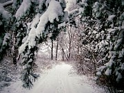 Snowy Roads Photo Posters - Winter Footpath Poster by Daniel Janda