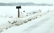 Mail Box Photo Metal Prints - Winter Foragers Metal Print by Julie Dant