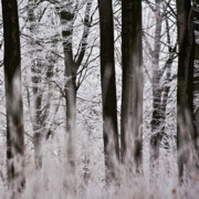 Winter Forest 1 Print by Heiko Koehrer-Wagner