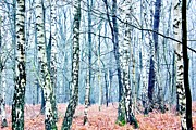 Winter Forest 2 Print by Xoanxo Cespon