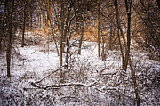 Wintery Photo Posters - Winter forest Poster by Elena Elisseeva