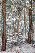 Park Scene Originals - Winter Forest by Gary Gish