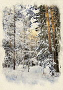 No Love Posters - Winter Forest Landscape 44 Poster by Yury Malkov