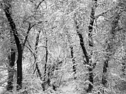 Braches Prints - Winter Forrest Print by Lane Erickson
