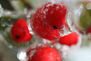 Berries Red  Ice Storm Posters - Winter Frozen Berries Poster by Nadine Rippelmeyer
