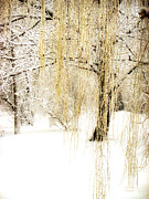 Landscape With Trees Posters - Winter Gold Poster by Julie Palencia