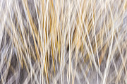 Yellow Line Prints - Winter grass abstract Print by Elena Elisseeva