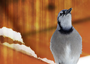 Blue Jay Digital Art - Winter Heat Blue Jay by Bill Tiepelman