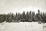 Canadian Winter Art Prints - Winter Hill Forest Print by Andrea Hazel Ihlefeld