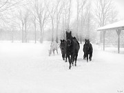 Karen Zucal Varnas - Winter Horses
