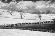 Daviess County Kentucky Prints - Winter in Kentucky Print by Wendell Thompson