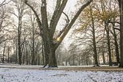 Patricia Hofmeester - Winter in november park with sun