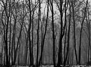 Winter Trees Photo Posters - Winter in Pennsylvania Poster by Benjamin Yeager