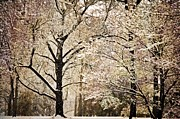 Marty Koch Photo Acrylic Prints - Winter In St. Louis Acrylic Print by Marty Koch