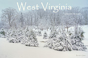 Evergreen Covered In Snow Framed Prints - Winter in West Virginia Framed Print by Benanne Stiens