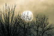 Moon Art - Winter Into Spring by Bob Orsillo